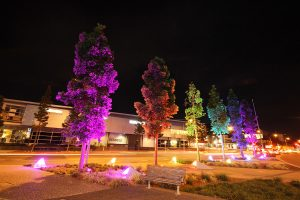 Kauri Pines Brisbane Outdoor LED Lights Tree Illumination