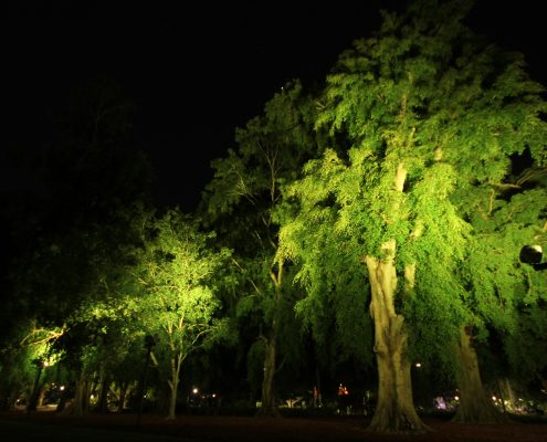 City Botanical Gardens Outdoor LED Tree Illumination